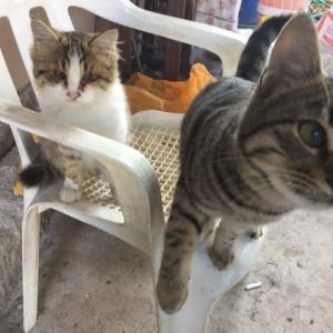 私にとって初外出制限 & 猫 in トルコ