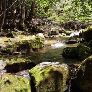 矢作川水系の渓へ 20200511