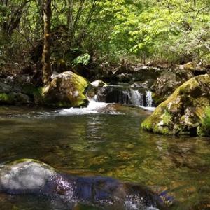 木曽川水系の渓20200517