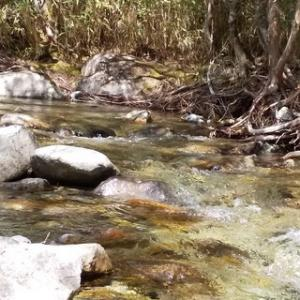 木曽川水系の渓20200524
