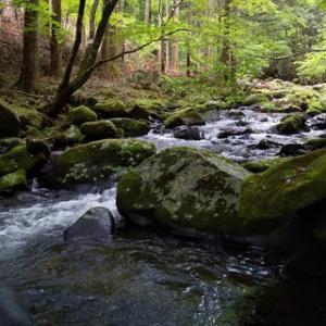 矢作川水系の渓20200601