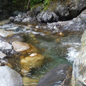 天竜川水系の渓20200612