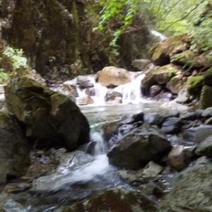 飛騨川水系の渓20200616