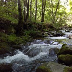 木曽川水系の渓20200702