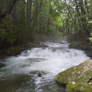 矢作川水系の渓20200710