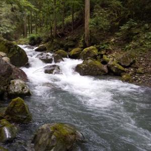 揖斐川水系の渓20200712
