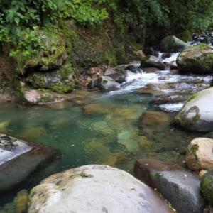 九頭竜川水系の渓20200727