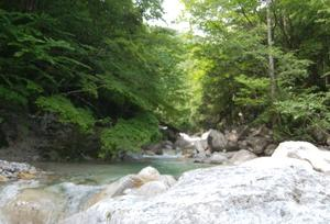 天竜川水系の渓へ