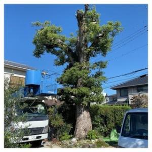樹齢200年・久米田池~2021.09.27