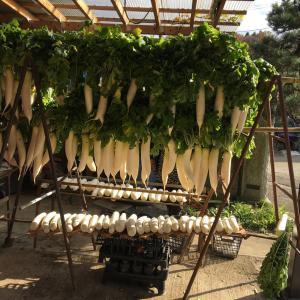 大根と干柿作り