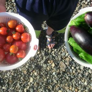 2020年 我家の家庭菜園事情~その2 収穫が始まった編
