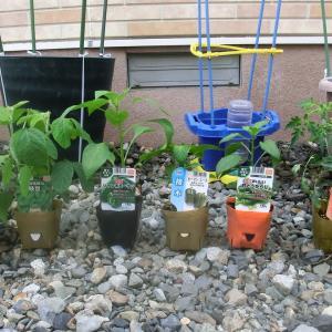 2021年 我が家の家庭菜園事情 ~その1