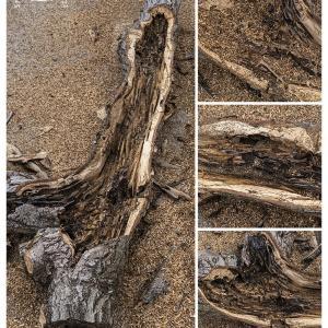 櫟を捌く 2