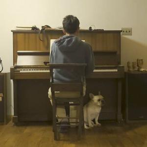 音楽は犬生に必要か?