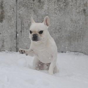 積雪ゼロになりました