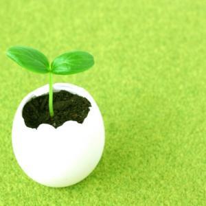 卵子の質の低下とチャンス