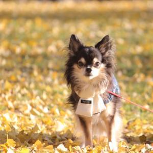 秋色のお散歩。