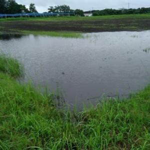 畑の排水対策!塩ビ管を埋める!