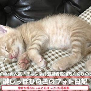【悲報】ワイが見てた猫系ユーチューバーのネッコが死んだんやが・・・したら投稿者がこうなった