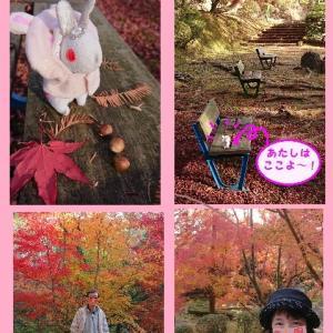 杉村公園とクリスマス。。。♪