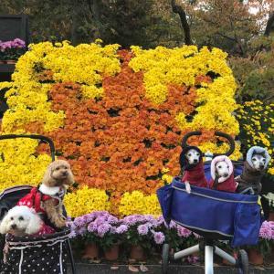 弘前城菊と紅葉祭り 1