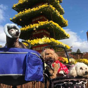 弘前城菊と紅葉祭り 2