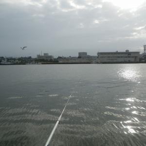 酒田港 イワシ釣りへ!!!
