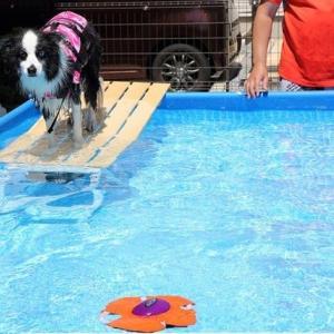 暑くなるとお庭でプール