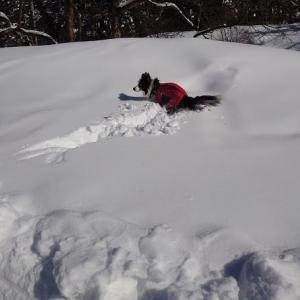 雪遊びに行ってきました