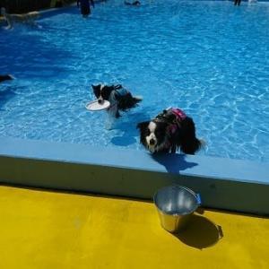 猛暑日はドッグプールへ