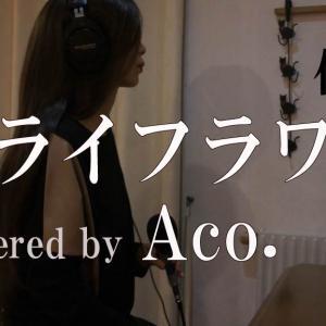 週末Acro.今週はAco.がドライフラワー/優里 を歌わせていただきましたん