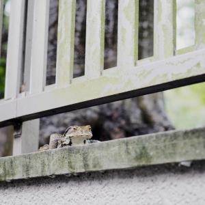 もう雨ばっかり 蛙もご満悦? こんな時だからのオリンパスカメラ