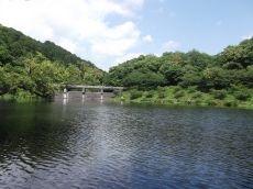 急に暑くなったからか、それとも昨日の雨のせいか@増沢池-その1-