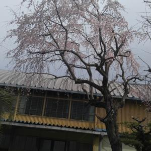日本から戻って来ました