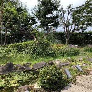 花、めだか、城址、青い空、白い雲… 屋上庭園からの眺め