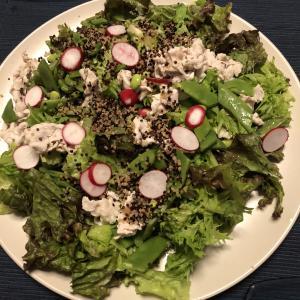 野菜たっぷり大盛りサラダ、ワンプレート前菜 白ワインメニュー