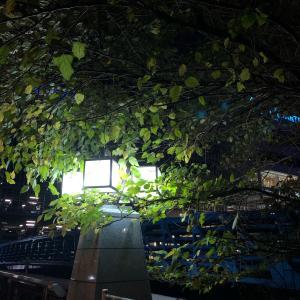 月夜の帰り道 美しい灯 夜景 横浜