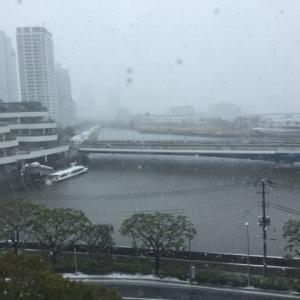 横浜吹雪いてるーーー