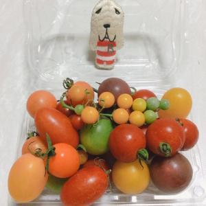何種類のトマトでしょう?