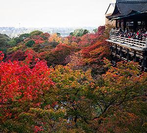 久しぶりの京都遠征【2014秋】