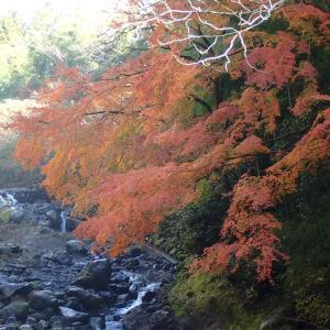 静岡「大棚の滝の紅葉」