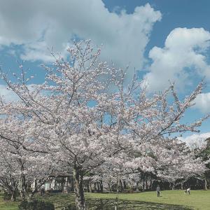 2020年4月2日近所で静かなお花見♪