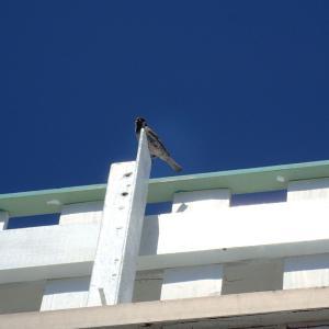 鳥たちで賑やかです。