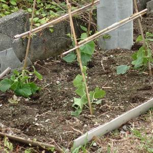 野菜の生育は順調です!