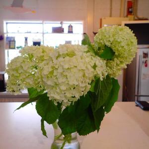 NOPのお花たち