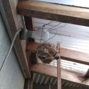 蜂の巣退治!