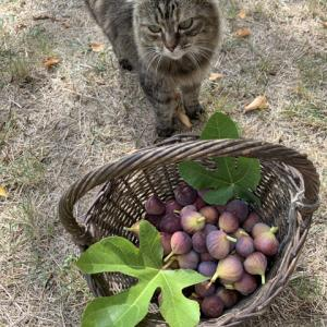 フランスの田舎で心豊かな時間を過ごしています。