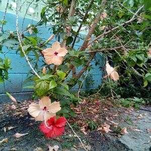 YURAちゃん的な花