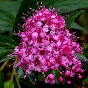 6月の南九州の花