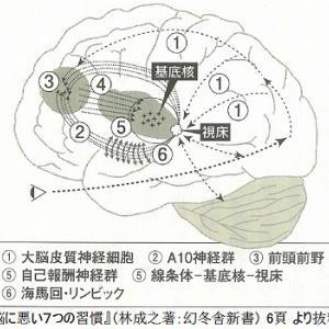 ●脳の仕組みと仏教